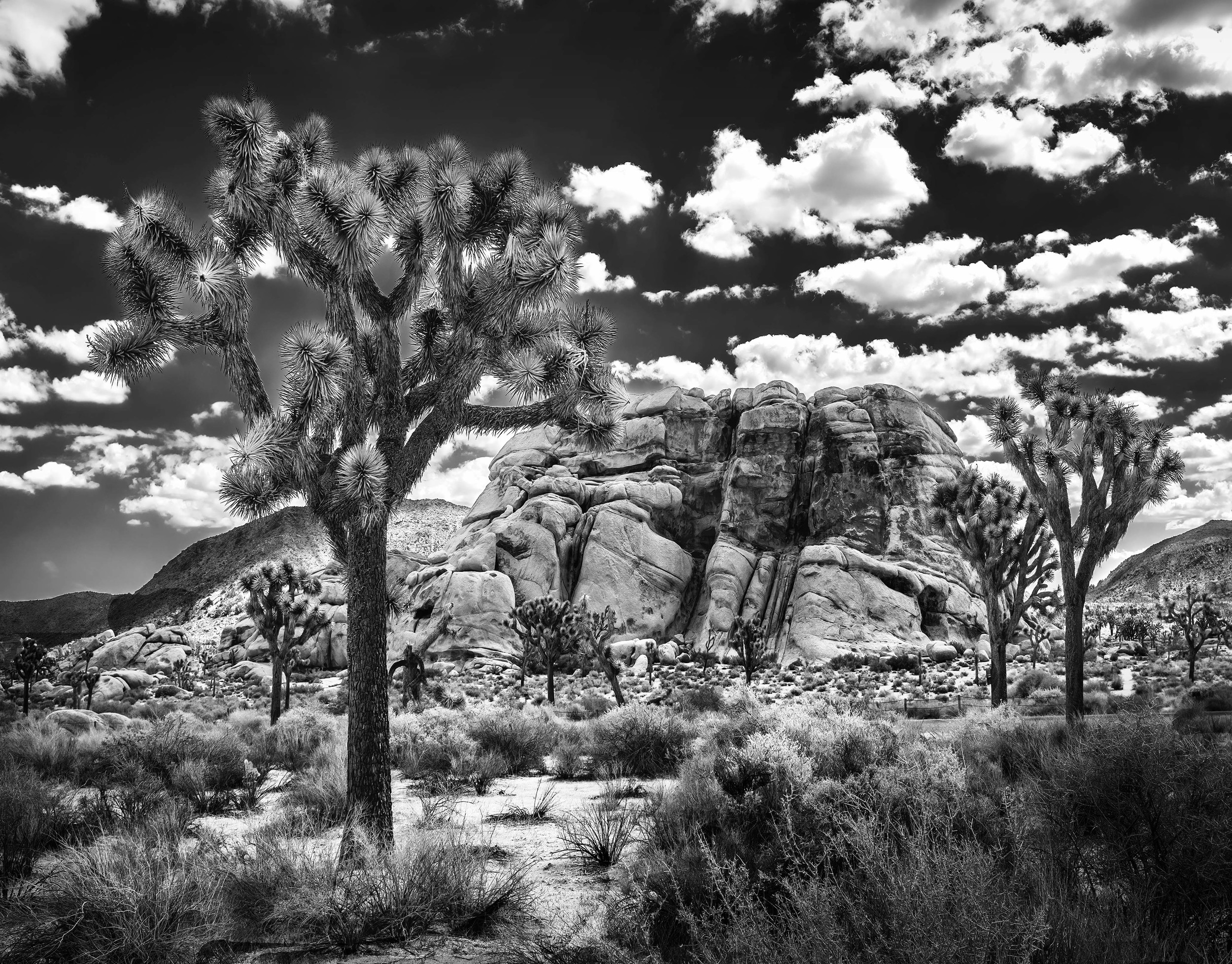 Joshua Tree Topaz (10.75 X 13.75) B&W Effecys 2DSCF9258 adjust copy